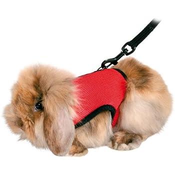 Amazon.com : Trixie Pet Products 61512 1.20 m Guinea Pig Soft ...