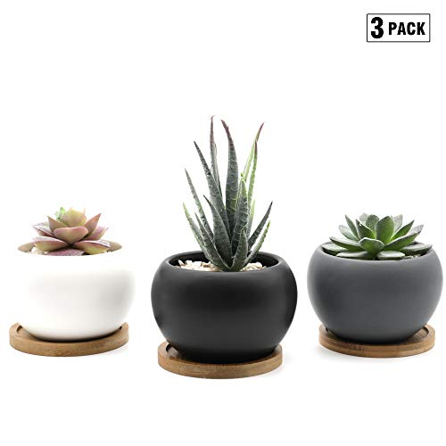 Natura Amans Succulent Plant pots- 3 inch Succulent Planter Set of 3, Modern Design pots for Cactus or Small Plants, with Drainage Hole and Bamboo Bases