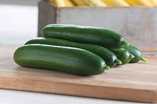 Diva F1 Cucumber Seeds (20 Seed Pack) - Hybrid Diva