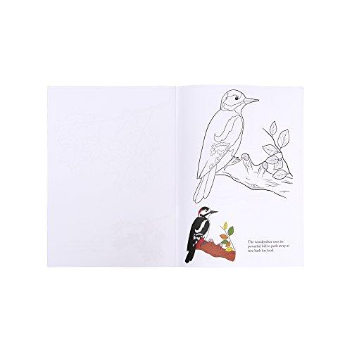 cheap Libro de colorear Colores de otoño: Actividades y productos ...