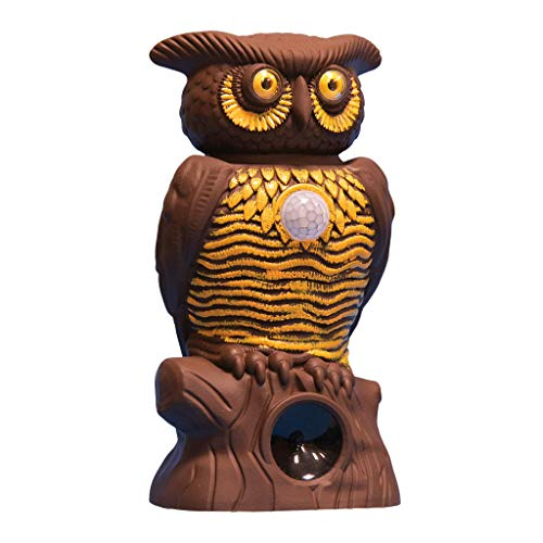 - BulbHead Owl Alert Owl Statue - Pesticide-Free Pest Control - Targets Outdoor Pests Like Racoons, Deer, Rabbits, Squirrels, Mice - Plastic Owl Statue with Light-Up Eyes for Fence & Garden