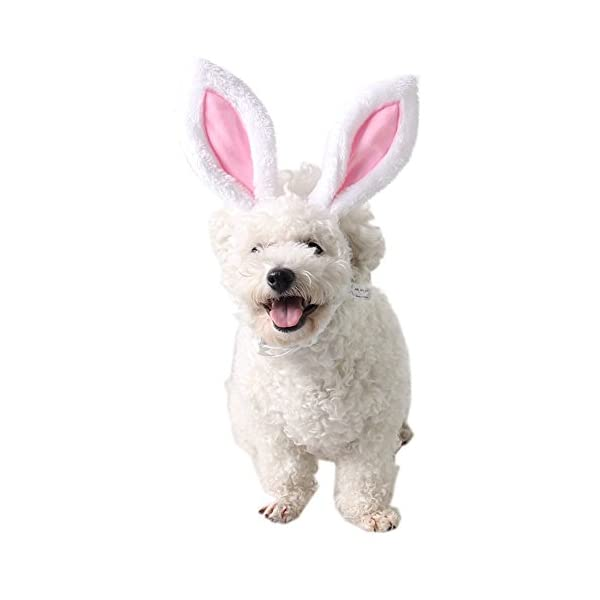 FLAdorepet Halloween Bunny Ears for Cats & Small Dogs Party Costume Accessory Head wear 1