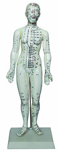 Top acupuncture model female
