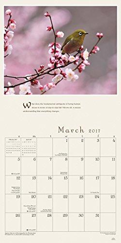 Pema Chodron 2017 Wall Calendar: Awakening the Heart — A Year of Inspirational Quotes