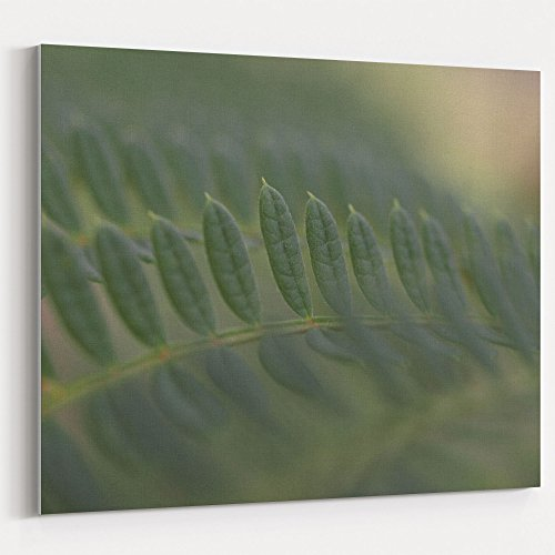 (Westlake Art - Vegetation Leaf - 16x20 Canvas Print Wall Art - Canvas Stretched Gallery Wrap Modern Picture Photography Artwork - Ready to Hang 16x20 Inch (D41D8))