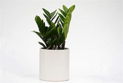 Amazon.com: Cilíndrico simple blanco negro estilo nórdico ...