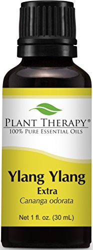 - Plant Therapy Ylang Ylang Extra Essential Oil. 100% Pure, Undiluted, Therapeutic Grade. 30 ml (1 oz).