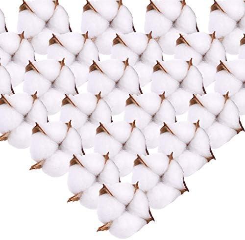 XHXSTORE 50Pcs Teste di Fiori in Cotone Naturale Ornamenti di Fiori secchi Decorazioni Natalizie Fiori Artificiali in Cotone Finto per Vaso Display Ghirlanda Matrimonio a casa Composizione Floreale
