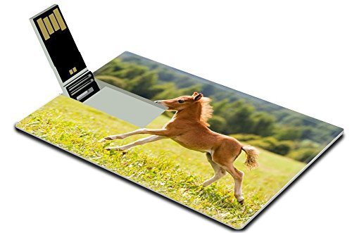 liili-4gb-usb-flash-drive-20-memory-stick-credit-card-size-image-id-15217589-foal-mini-horse-falabel