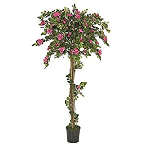 6 Foot Beauty Pink Bougainvillea Topiary on Natural Wood Trunk Signature Foliage 30