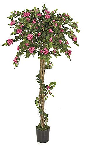 AUF001-6-Foot-Beauty-Pink-Bougainvillea-Topiary-on-Natural-Wood-Trunk-Signature-Foliage