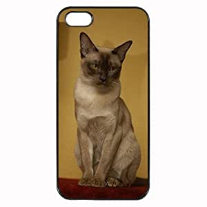Custom BURMESE KITTY CAT COVER CASE FOR IPHONE 5 5S PHONE