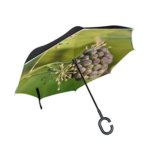 MOVTBA Double Layer Inverted Ivy Fruit Fruits Berries Common Ivy Ivy Umbrellas Reverse Folding Umbrella Windproof Uv Protection Big Straight Umbrella for Car Rain Outdoor with C-Shaped Handle
