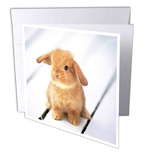 3dRose Adorable Barbara Bunny Rabbit - Greeting Cards, 6 x 6 inches, set of 6 (gc_55173_1)