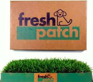 Fresh Patch Disposable Dog Potty with REAL Grass - As Seen on SHARK TANK by Fresh Patch