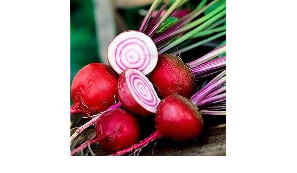 FARMERLY Paquete de semillas 100 PC/bolsa importada plantas de ...