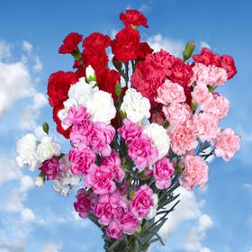 GlobalRose 100 Fresh Cut Valentine's Spray Carnations - Fresh Flowers Express Delivery - Perfect Valentine's Day Gift by GlobalRose (Image #2)