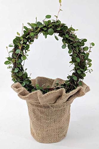 Angel Vine Wreaths in Skirted Burlap