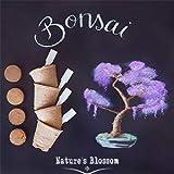 Nature's Blossom Bonsai Tree Kit. Grow 4 Types of