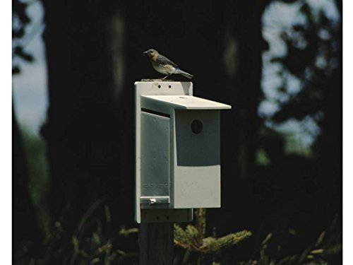 Best Bluebird House Money Can Buy - Bluebird Society Bluebir