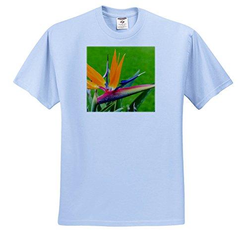 3dRose Danita Delimont - Flowers - Bird Of Paradise Flower, Waimea Valley, North Shore, OAHU, Hawaii. - T-Shirts - Light Blue Infant Lap-Shoulder Tee (12M) (TS_259226_76)