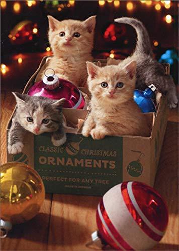 Avanti Press 702290 Avanti 10-Count Christmas Cards, Kittens in an Vintage Ornament Box