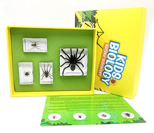 Spider Specimen in Acrylic Block Paperweights Science Classroom Specimens for Science Education