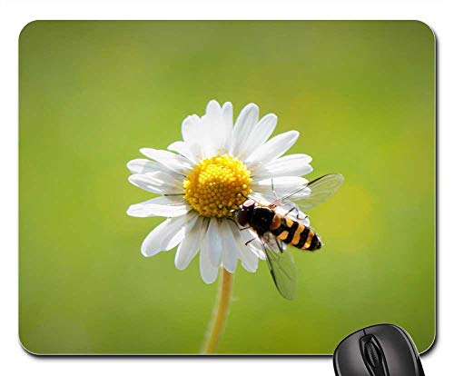 Mouse Pads - Daisy Spring Harbinger of Spring Close Flower