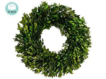 17 Inch Real Boxwood Wreath- Preserved (Christmas Ideas Wreath Fresh)