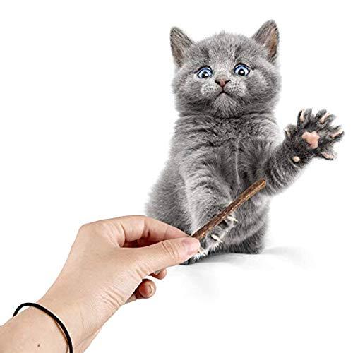Palillos de Dientes para Gatos Alimentos y Dulces Aperitivos Limpieza de Dientes Mindruer Cat Molar