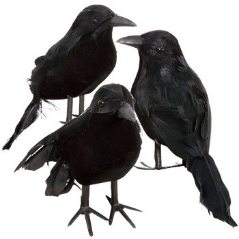 Black Feathered Small Halloween Crows - 3 Pc Black Birds -