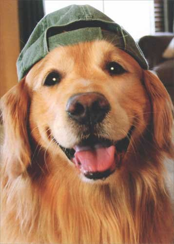 Golden Retriever Pets Cap - Golden Retriever Baseball Cap Avanti Deluxe Matte Dog Blank Note Card