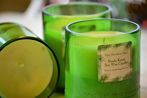 All Natural Koala Craze Soy Wax Candle | 14 oz.| 55+ burn - Vogue Glasses Price