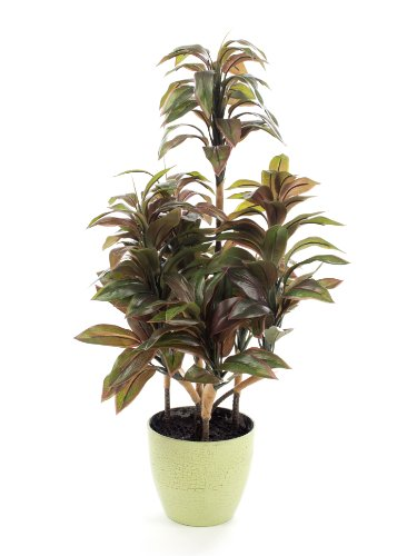 Closer2Nature Artificial 2ft Variegated Green and Burgundy Dragon Tree Plant in a Decorative Crackle Glazed Pot (Patios In Uk For Trees Pots)
