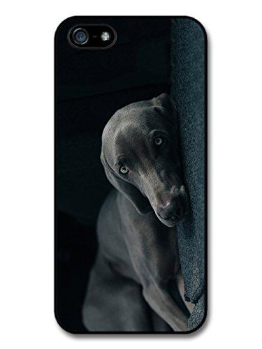 Weimaraner Dog Cute Cool Sleepy Black Dog Blue Eyes case for iPhone 5 5S