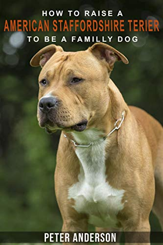 How to rasie a american staffordshire terier to be family dog:  American Staffordshire Terrier Socializing, Obedience Training,, Housetraining, Behavioral Training and much More (Best Bull Terrier Breeders)