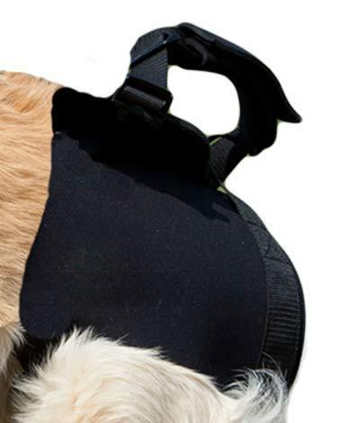 Beststar - Arnés de elevación para Perro, Color Negro: Amazon.es ...