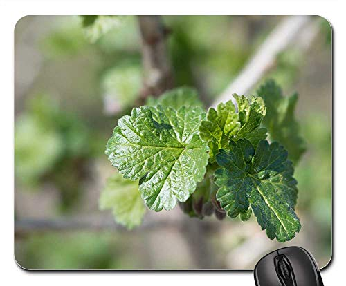 - Mouse Pad - Leaves Branch Engine Spring Currant Currant Leaves