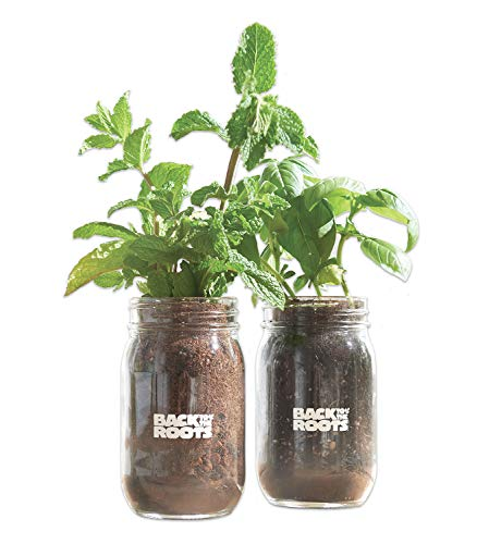 - Indoor Herb Garden Kit By Back To The Roots - Grow Non-GMO Basil And Mint Plants Using Organic Seeds At Home Like Ayesha Curry - Starter Set Comes With Her Recipe Booklet