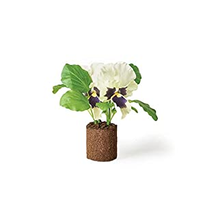 "Napa Home & Garden Pansy 6.5"" Drop-in 120"