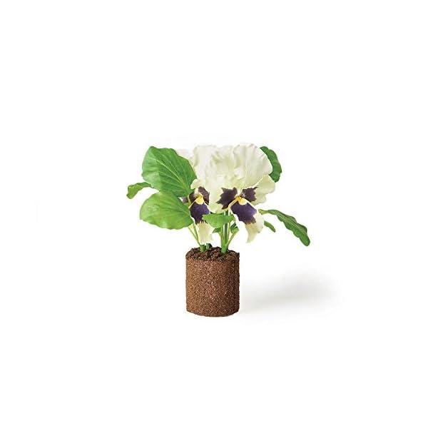 Napa Home & Garden Pansy 6.5″ Drop-in