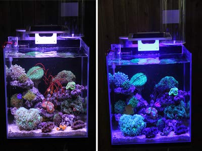 110V Dimmable LED Aquarium Light Dimmer Fish Plants Coral Reef