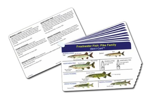 - Fish Ident-I-Cards - Set of 9 Freshwater Fish Identification Cards