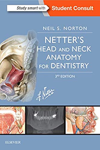 Netter Head And Neck Anatomy Diagram - Car Wiring Diagrams Explained •