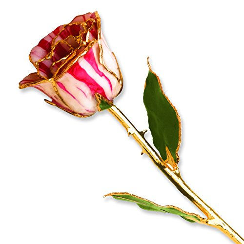 (Allmygold Jewelers Peppermint Long Stem Dipped 24K Gold Trim Genuine Rose in Gold Gift Box)