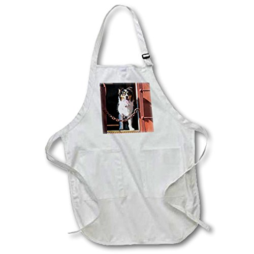 danita-delimont-dogs-australian-shepherd-in-a-train-car-black-full-length-apron-with-pockets-22w-x-3
