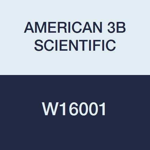 3B Scientific W16001 Functional Heart and Circulatory Sys...