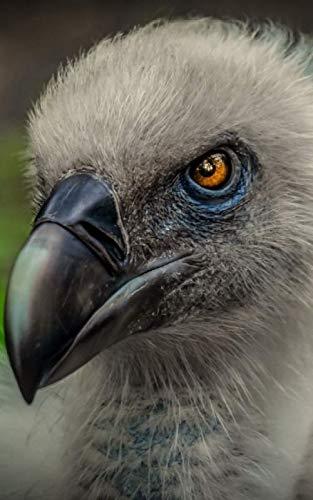 Notebook: Vulture Bird of Prey Carnivore Meat Eater 5