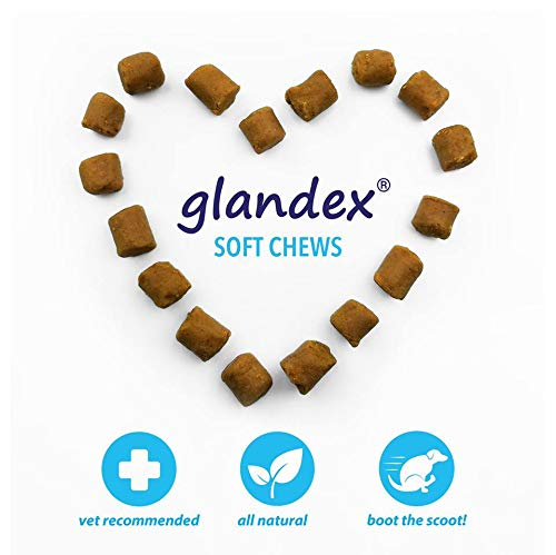 Glandex Anal Gland Soft Chew Treats with Pumpkin for Dogs 60ct Peanut Butter Chews with Digestive Enzymes, Probiotics Fiber Supplement for Dogs - Vet Recommended - Boot The Scoot