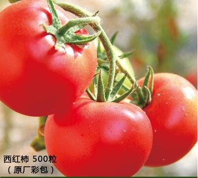 2000pc Saisongemüsesaatgut, Topf Balkon Garten, Herbst Aussaat Raps Blumen, Paprika, Erdbeeren, Schnittlauch, Petersilie, Kohl